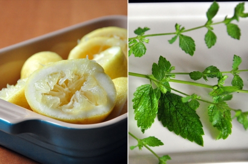 Lemon Balm and Lemons
