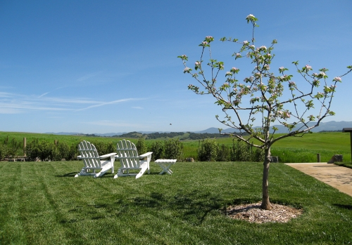 Looking out over green fields at The Carneros Inn in Napa